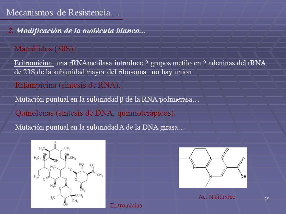 16 Macrólidos (30S): Eritromicina: una rRNAmetilasa introduce 2 grupos metilo en 2 adeninas del rRNA de 23S de la subunidad mayor del ribosoma...no ha