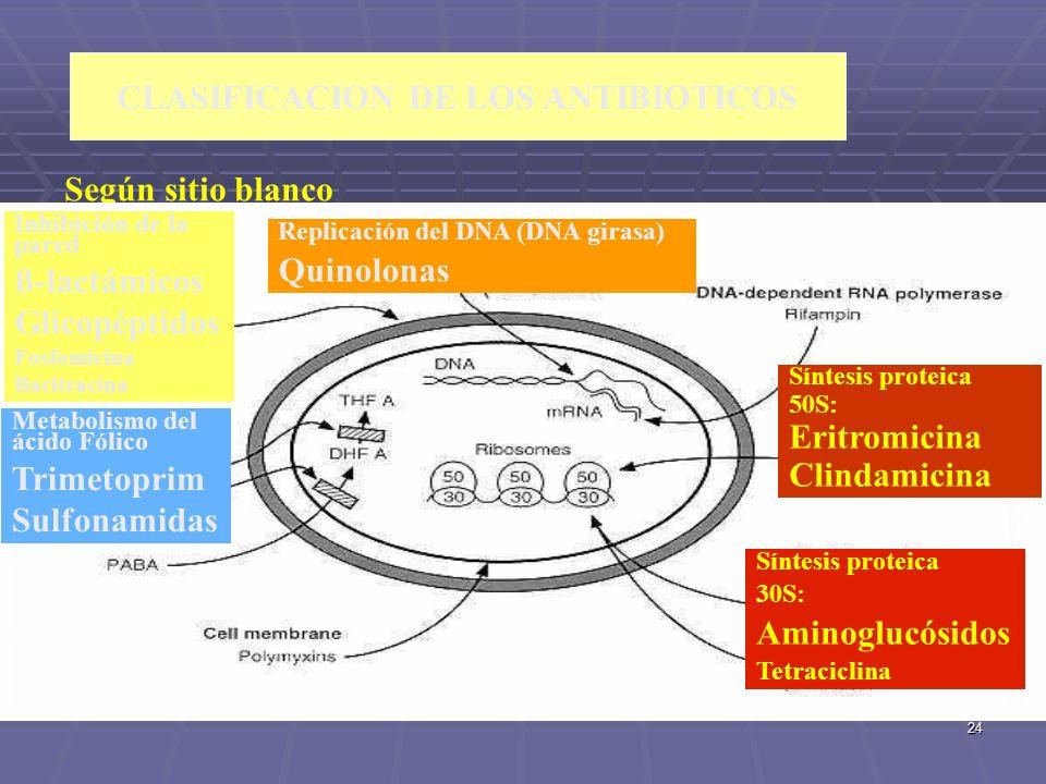 24 CLASIFICACION DE LOS ANTIBIOTICOS Según sitio blanco Inhibición de la pared ß-lactámicos Glicopéptidos Fosfomicina Bacitracina Metabolismo del ácid