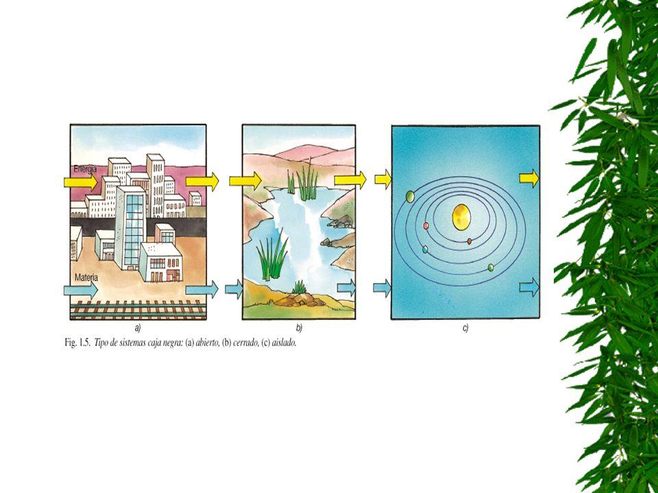 Tipos de modelos de caja negra Abiertos: En ellos se producen entradas y salidas de materia y energía. (ser vivo, ciudad) Cerrados. No hay intercambio