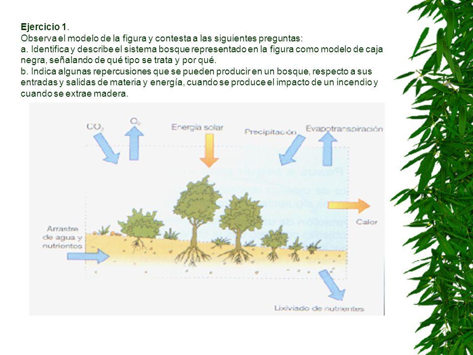 Ejercicio 1.Observa el modelo de la figura y contesta a las siguientes preguntas: a.
