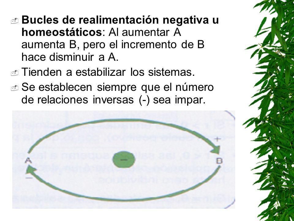 Bucles de realimentación negativa u homeostáticos: Al aumentar A aumenta B, pero el incremento de B hace disminuir a A.