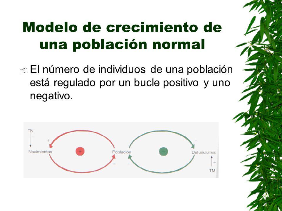 Modelo de crecimiento de una población normal El número de individuos de una población está regulado por un bucle positivo y uno negativo.