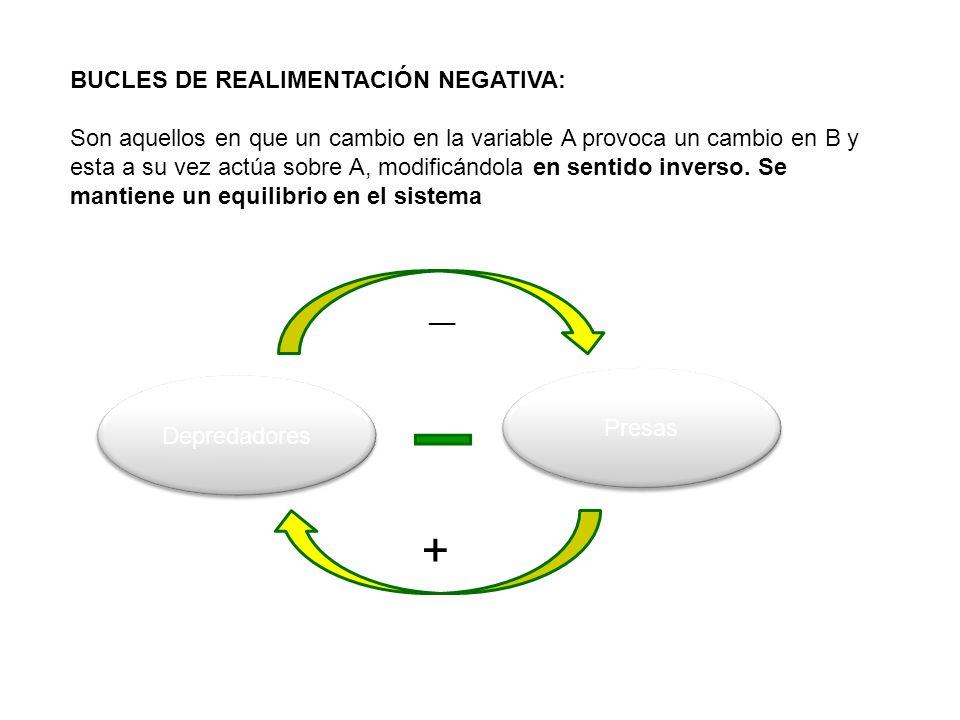 BUCLES DE REALIMENTACIÓN NEGATIVA: Son aquellos en que un cambio en la variable A provoca un cambio en B y esta a su vez actúa sobre A, modificándola en sentido inverso.