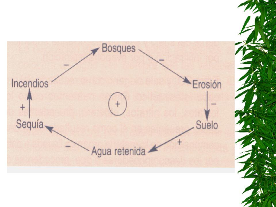 Ejercicio 3 Los incendios forestales constituyen un grave problema ambiental en España. Cada verano desaparecen muchas hectáreas de bosque y dejan el