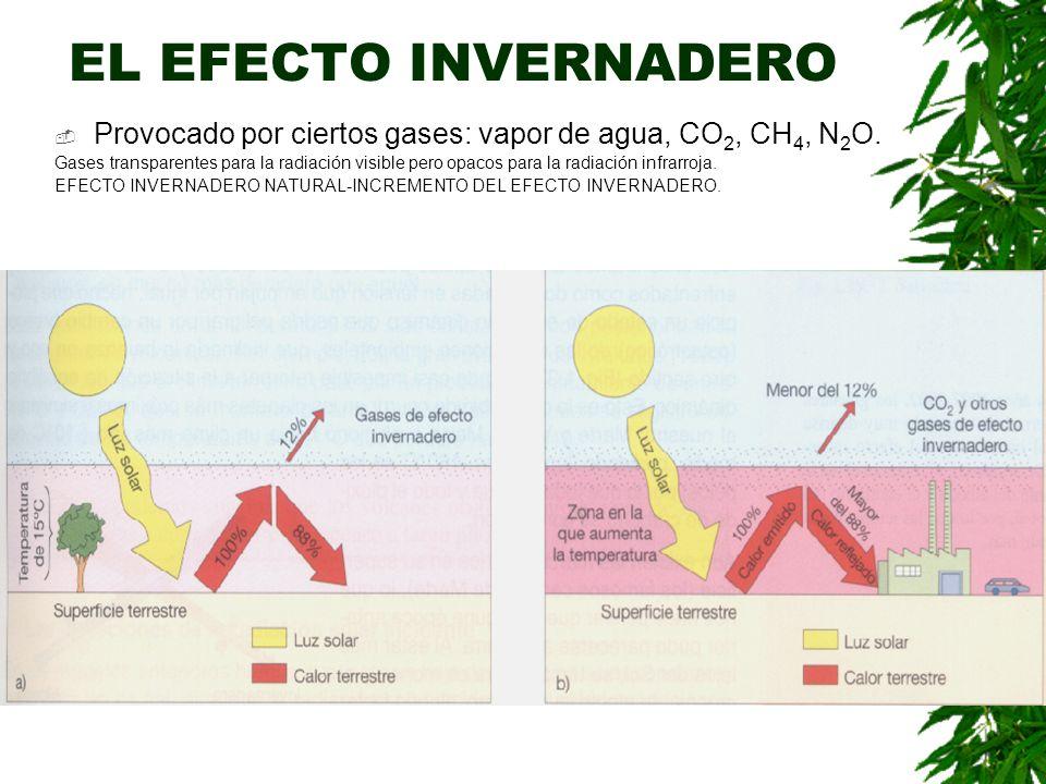 EL EFECTO INVERNADERO Provocado por ciertos gases: vapor de agua, CO 2, CH 4, N 2 O.
