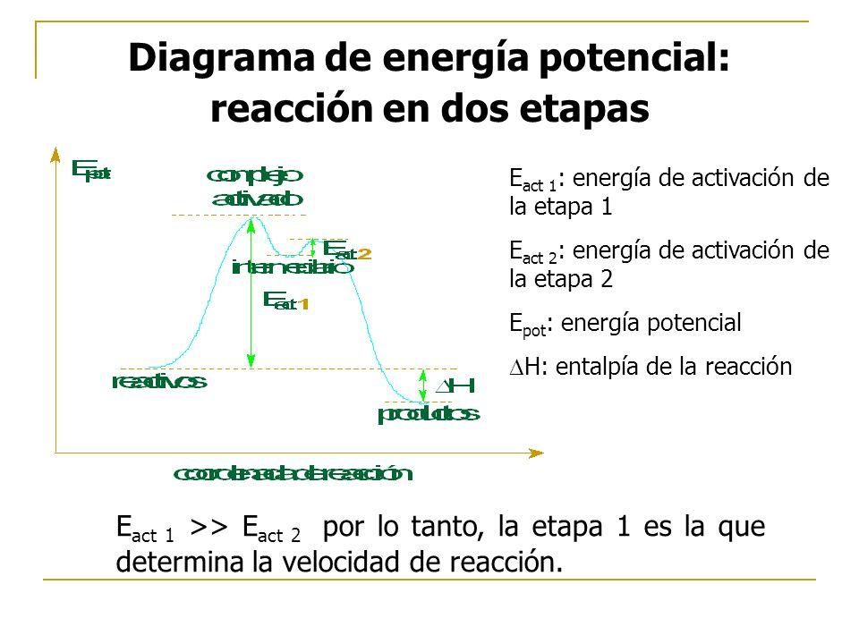 Diagrama de energía potencial: reacción en dos etapas E act 1 : energía de activación de la etapa 1 E act 2 : energía de activación de la etapa 2 E pot : energía potencial H: entalpía de la reacción E act 1 >> E act 2 por lo tanto, la etapa 1 es la que determina la velocidad de reacción.