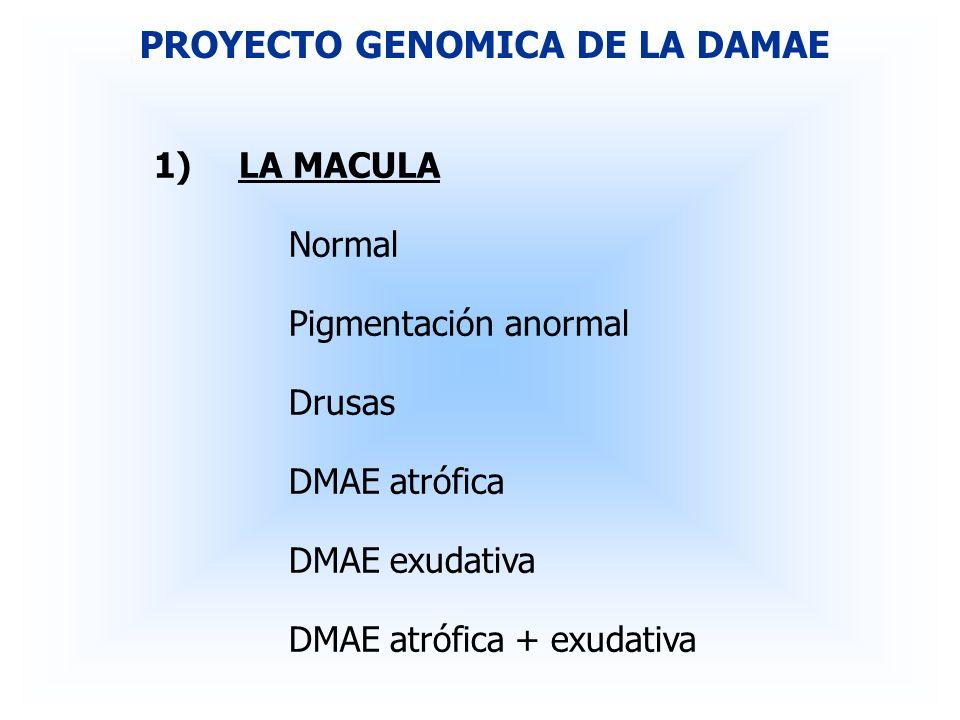 1)LA MACULA Normal Pigmentación anormal Drusas DMAE atrófica DMAE exudativa DMAE atrófica + exudativa PROYECTO GENOMICA DE LA DAMAE