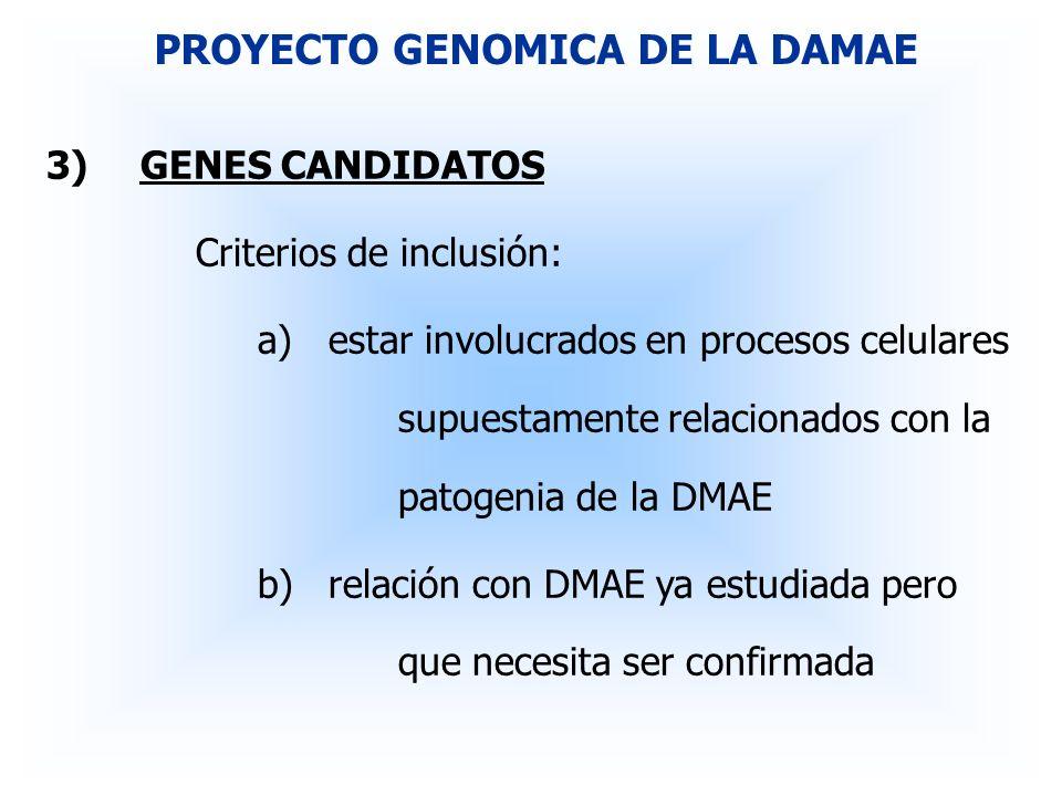 3)GENES CANDIDATOS Criterios de inclusión: a)estar involucrados en procesos celulares supuestamente relacionados con la patogenia de la DMAE b)relació