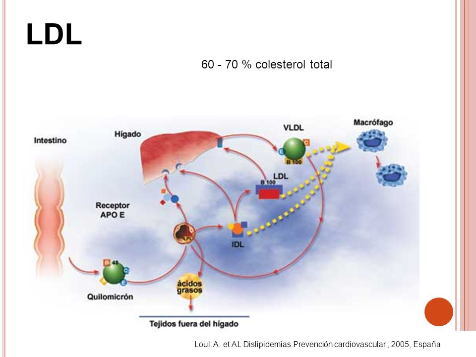 LDL 60 - 70 % colesterol total Loul. A. et AL Dislipidemias.Prevención cardiovascular, 2005, España