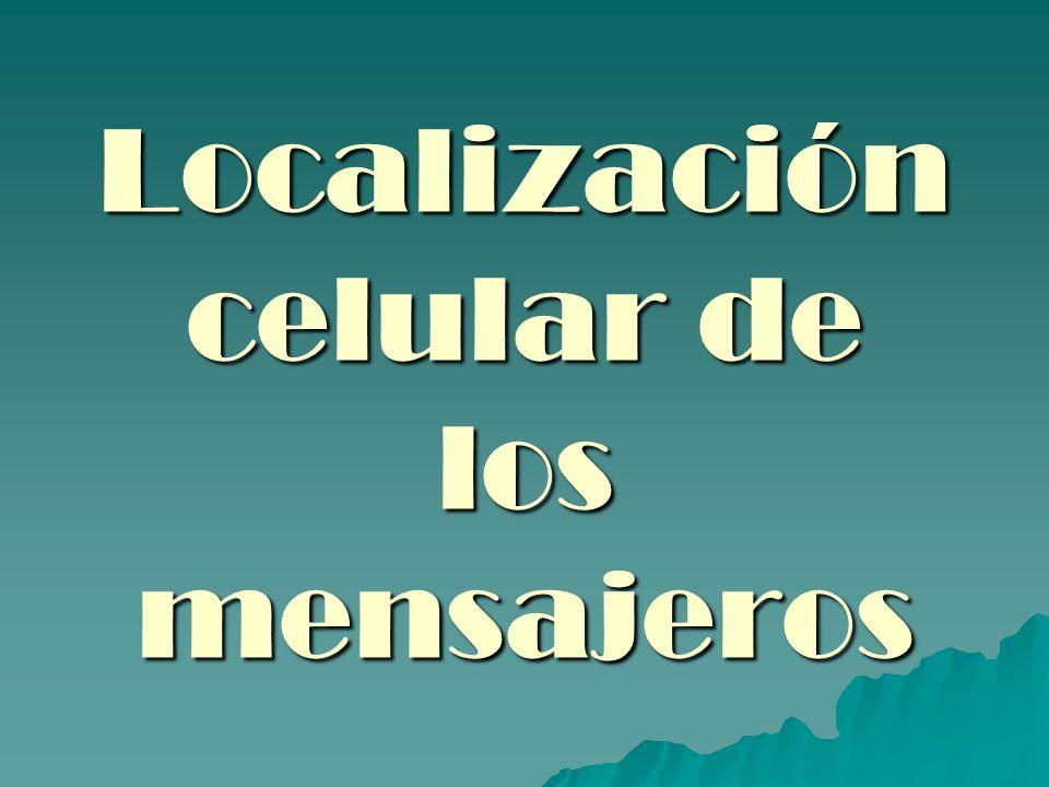 INTRODUCCION LOS MENSAJEROS VIAJAN DEL CITOPLASMA AL NUCLEO PARA SER TRADUCIDOS LOS MENSAJEROS VIAJAN DEL CITOPLASMA AL NUCLEO PARA SER TRADUCIDOS SE LOCALIZAN EN LUGARES ESPECIFICOS PARA CUMPLIR SU FUNCION IMPORTANCIA EN DESARROLLO