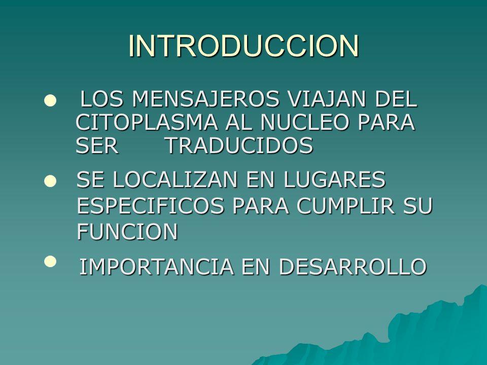 FUNCIONES DE LA LOCALIZACION REGULACION DE LA EXPRESION GENICA SINTESIS LOCAL DE PROTIENAS DESARROLLO EMBRIONARIO DETERMINANTES CITOPLASMICOS POLARIZACION FACILITAR LA TRADUCCION