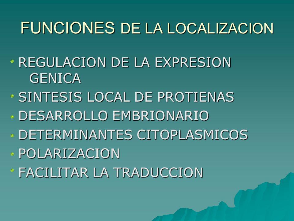FUNCIONES DE LA LOCALIZACION REGULACION DE LA EXPRESION GENICA SINTESIS LOCAL DE PROTIENAS DESARROLLO EMBRIONARIO DETERMINANTES CITOPLASMICOS POLARIZA