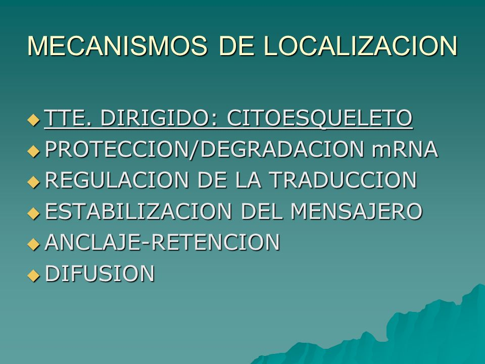 MECANISMOS DE LOCALIZACION TTE. DIRIGIDO: CITOESQUELETO TTE. DIRIGIDO: CITOESQUELETO PROTECCION/DEGRADACION mRNA PROTECCION/DEGRADACION mRNA REGULACIO