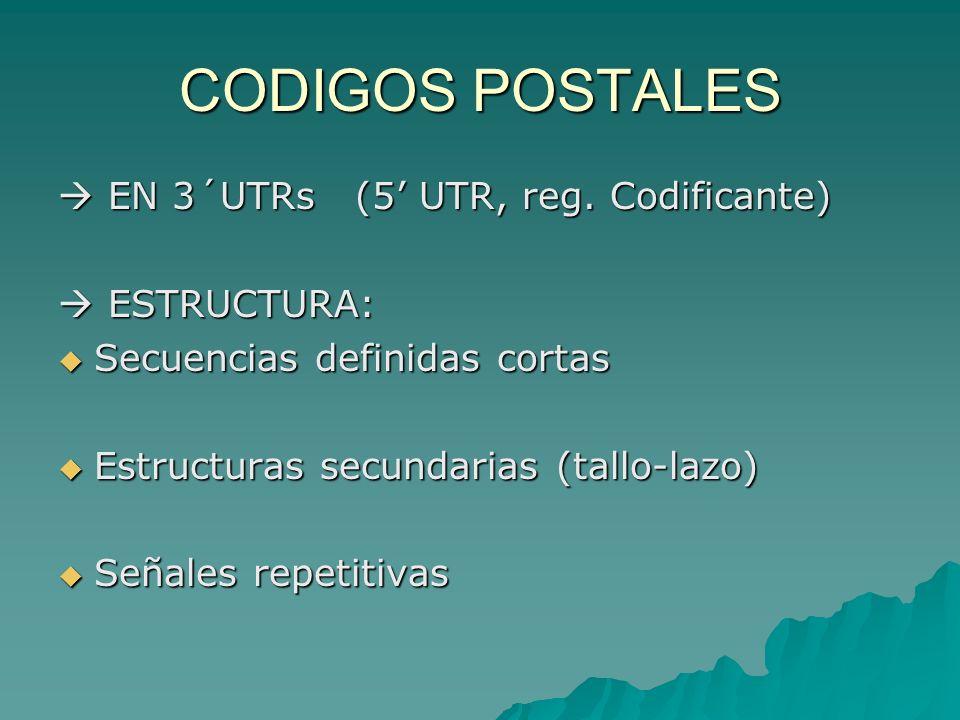CODIGOS POSTALES > TTE.