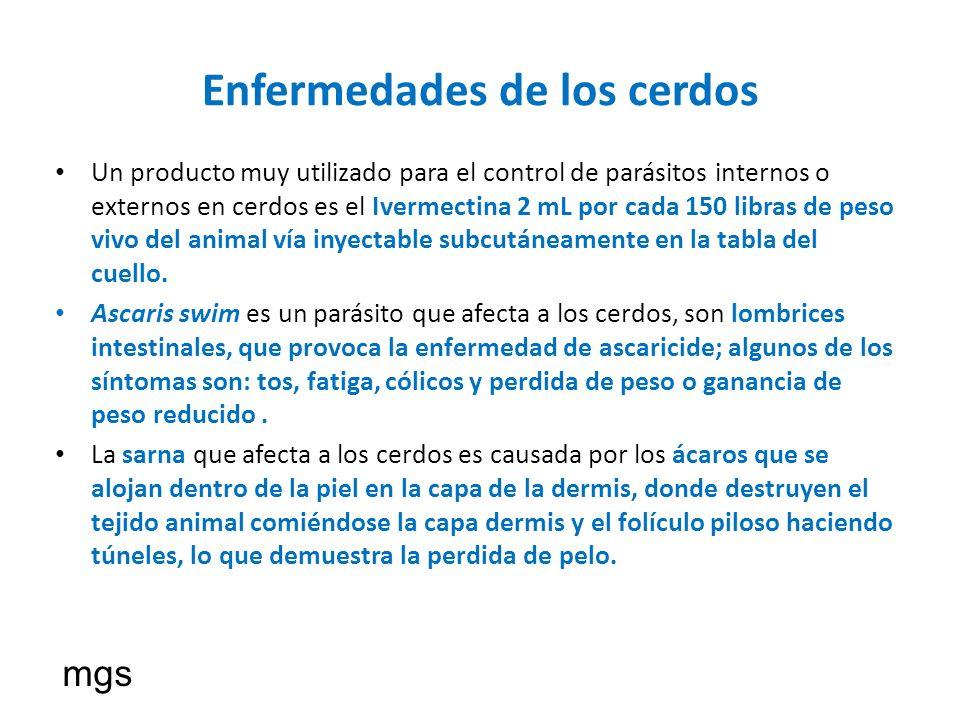 Enfermedades de los cerdos Un producto muy utilizado para el control de parásitos internos o externos en cerdos es el Ivermectina 2 mL por cada 150 li