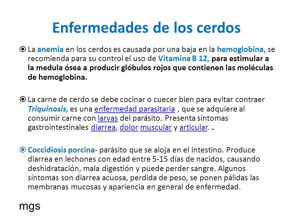 Enfermedades de los cerdos La anemia en los cerdos es causada por una baja en la hemoglobina, se recomienda para su control el uso de Vitamina B 12, p