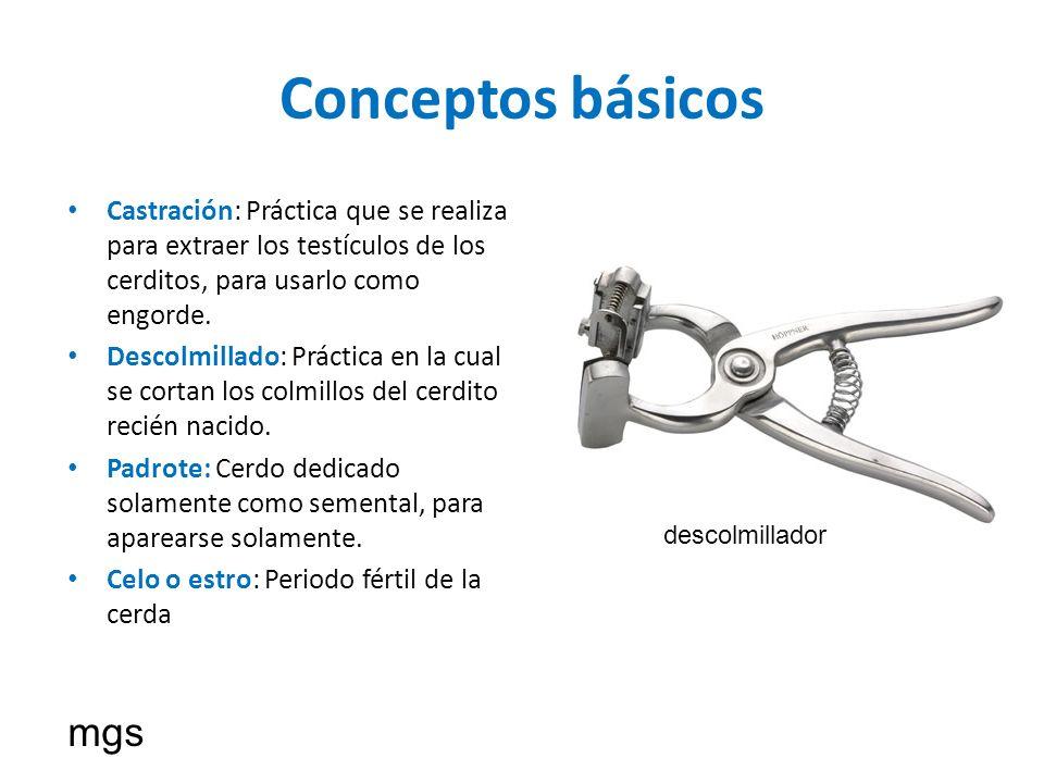 Conceptos básicos Castración: Práctica que se realiza para extraer los testículos de los cerditos, para usarlo como engorde. Descolmillado: Práctica e