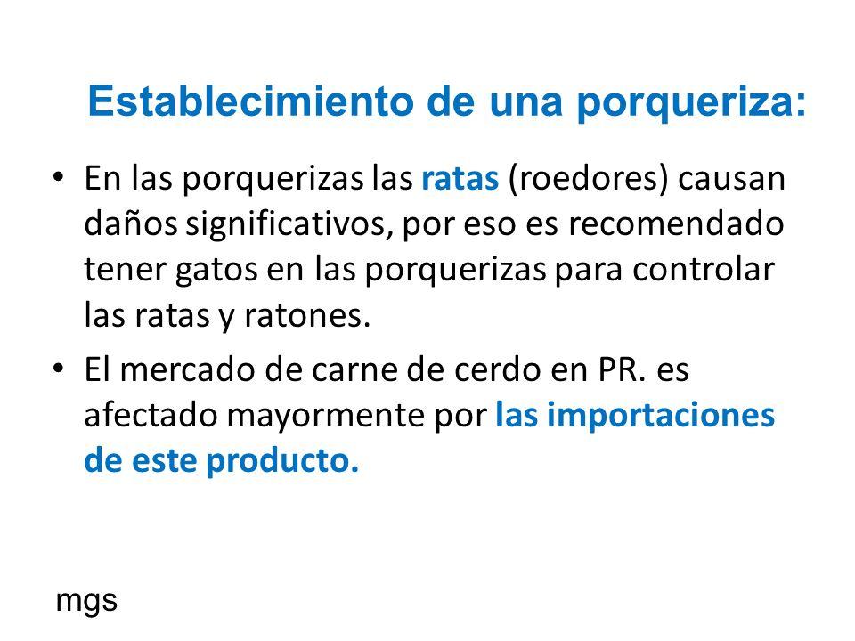 En las porquerizas las ratas (roedores) causan daños significativos, por eso es recomendado tener gatos en las porquerizas para controlar las ratas y