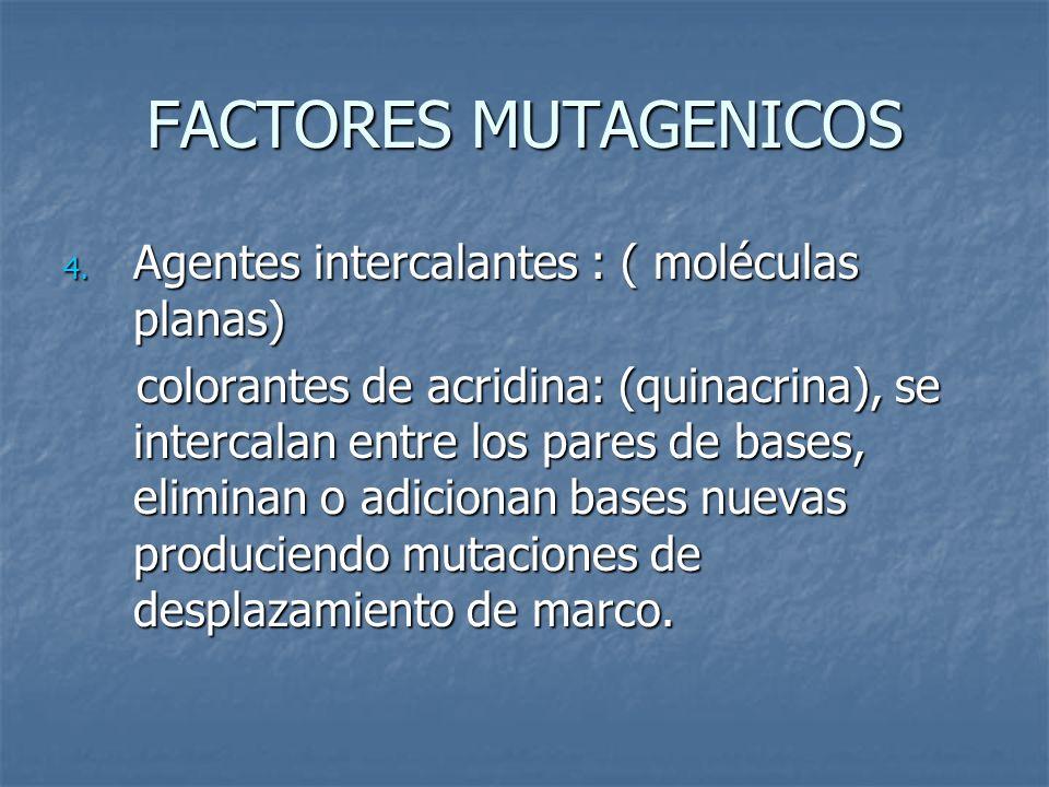 FACTORES MUTAGENICOS 4. Agentes intercalantes : ( moléculas planas) colorantes de acridina: (quinacrina), se intercalan entre los pares de bases, elim
