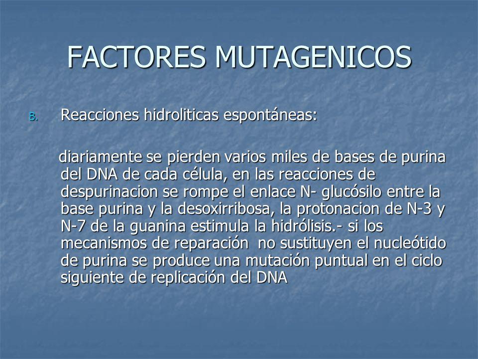 FACTORES MUTAGENICOS B. Reacciones hidroliticas espontáneas: diariamente se pierden varios miles de bases de purina del DNA de cada célula, en las rea