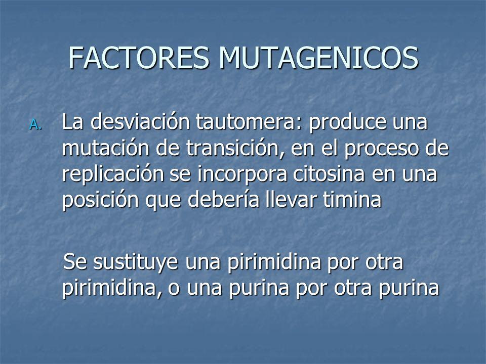 FACTORES MUTAGENICOS A. La desviación tautomera: produce una mutación de transición, en el proceso de replicación se incorpora citosina en una posició