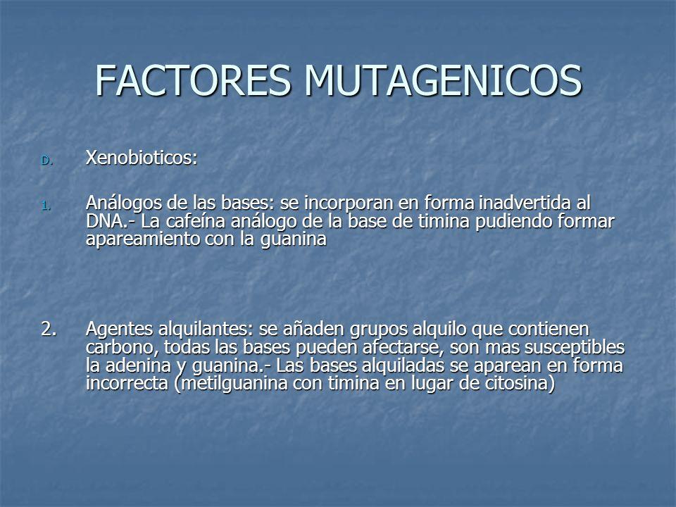 FACTORES MUTAGENICOS D. Xenobioticos: 1. Análogos de las bases: se incorporan en forma inadvertida al DNA.- La cafeína análogo de la base de timina pu