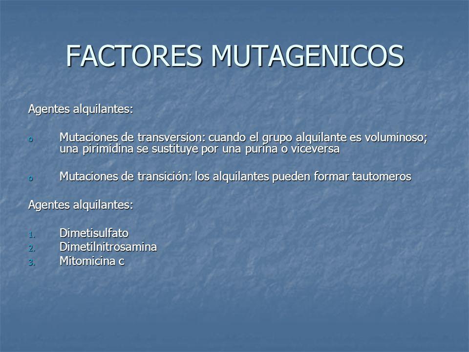 FACTORES MUTAGENICOS Agentes alquilantes: o Mutaciones de transversion: cuando el grupo alquilante es voluminoso; una pirimidina se sustituye por una purina o viceversa o Mutaciones de transición: los alquilantes pueden formar tautomeros Agentes alquilantes: 1.