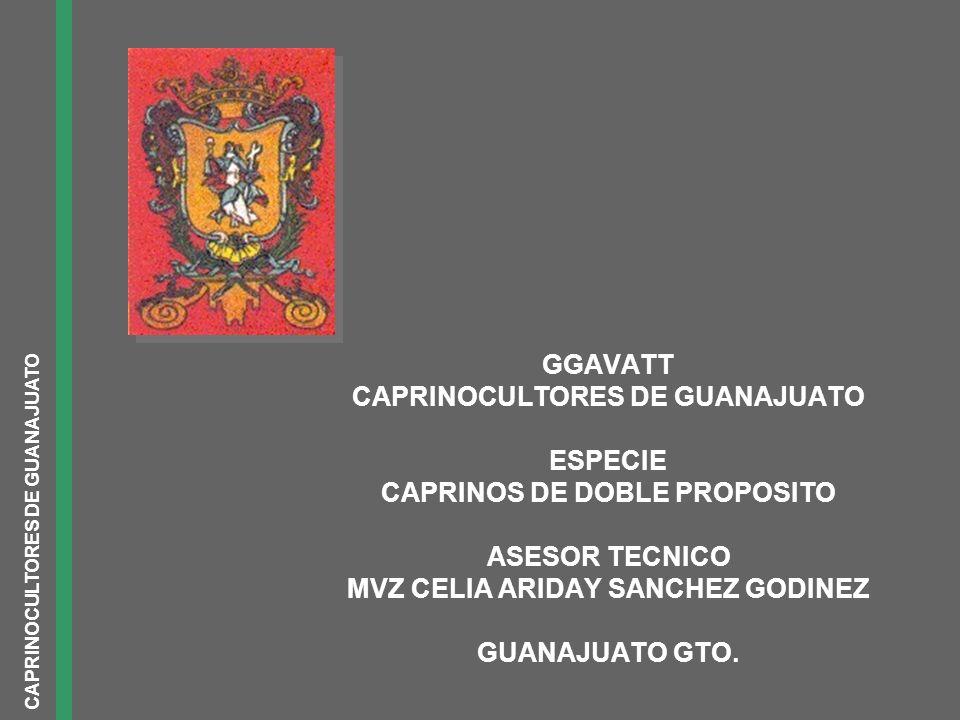 GGAVATT CAPRINOCULTORES DE GUANAJUATO ESPECIE CAPRINOS DE DOBLE PROPOSITO ASESOR TECNICO MVZ CELIA ARIDAY SANCHEZ GODINEZ GUANAJUATO GTO. CAPRINOCULTO