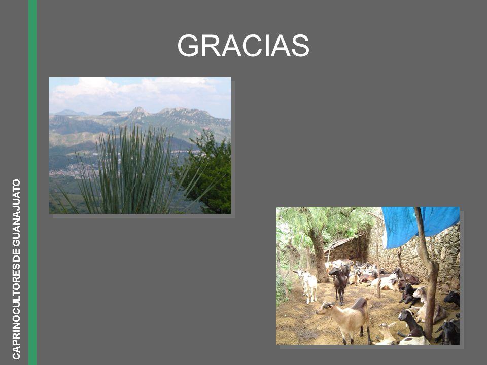 GRACIAS CAPRINOCULTORES DE GUANAJUATO