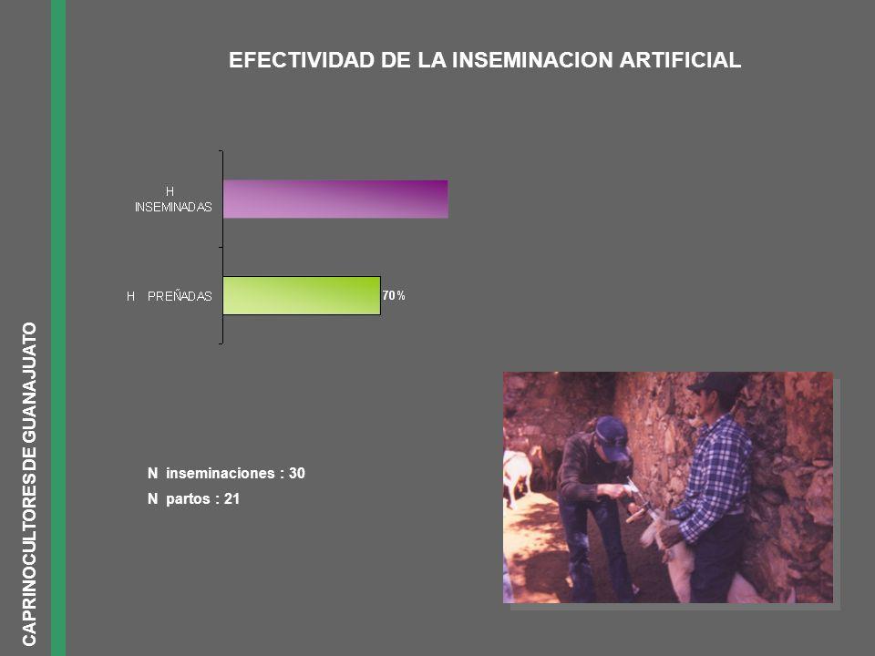 IMPACTO SOCIAL INTERCAMBIO DE EXPERIENCIAS Y AYUDA MUTUATECNOLOGIAS MENOR TIEMPO INVERTIDO EN LA ACTIVIDAD Y AYUDA MUTUA MANEJO ZOOTECNICO MEJORIA SIGNIFICATIVA EN EL PRECIO DE VENTA VENTA DE PIE DE CRIA DISMINUCION DE COSTOS Y TRATAMIENTOS OPORTUNOS POR EXISTENCIA DE BOTIQUIN COMPRA DE MEDICAMENTOS ABARATAMIENTO DE COSTOS Y DIETAS MAS ADECUADAS COMPRAS DE INSUMOS RESULTADO ACTIVIDADES GRUPALES CAPRINOCULTORES DE GUANAJUATO