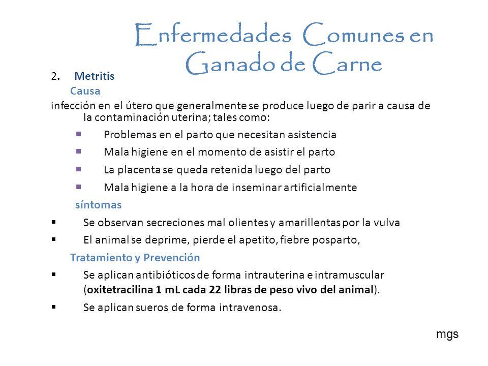 2. Metritis Causa infección en el útero que generalmente se produce luego de parir a causa de la contaminación uterina; tales como: Problemas en el pa