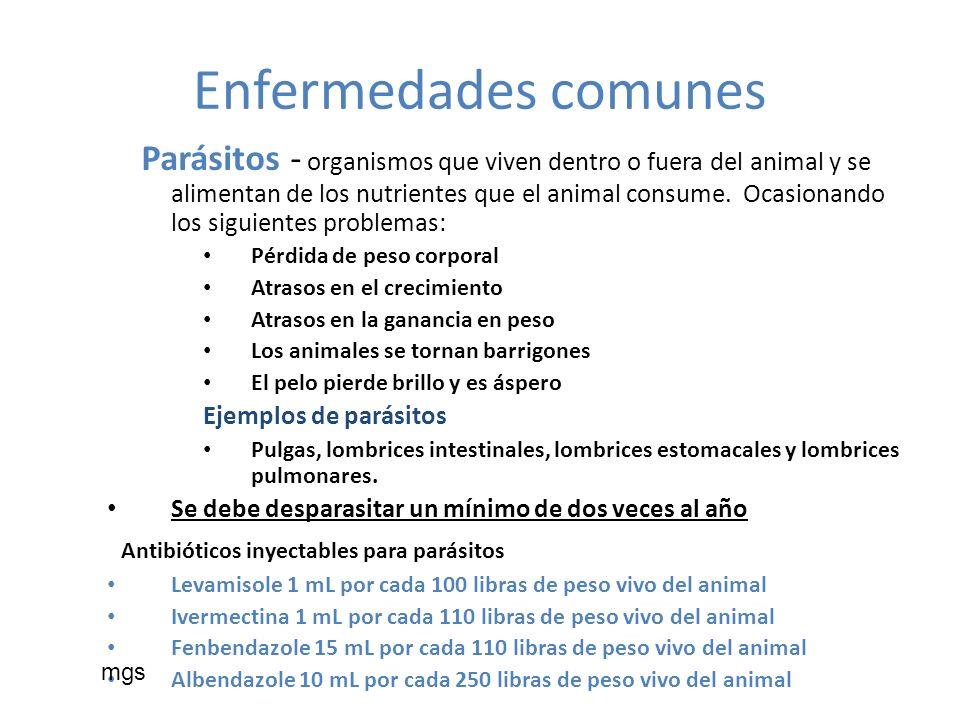 Enfermedades comunes Parásitos - organismos que viven dentro o fuera del animal y se alimentan de los nutrientes que el animal consume. Ocasionando lo