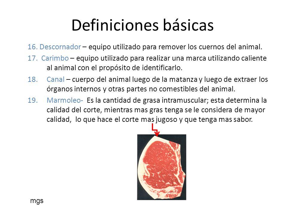 Productor de Carne Alimentación La vaca se clasifica como rumiante.