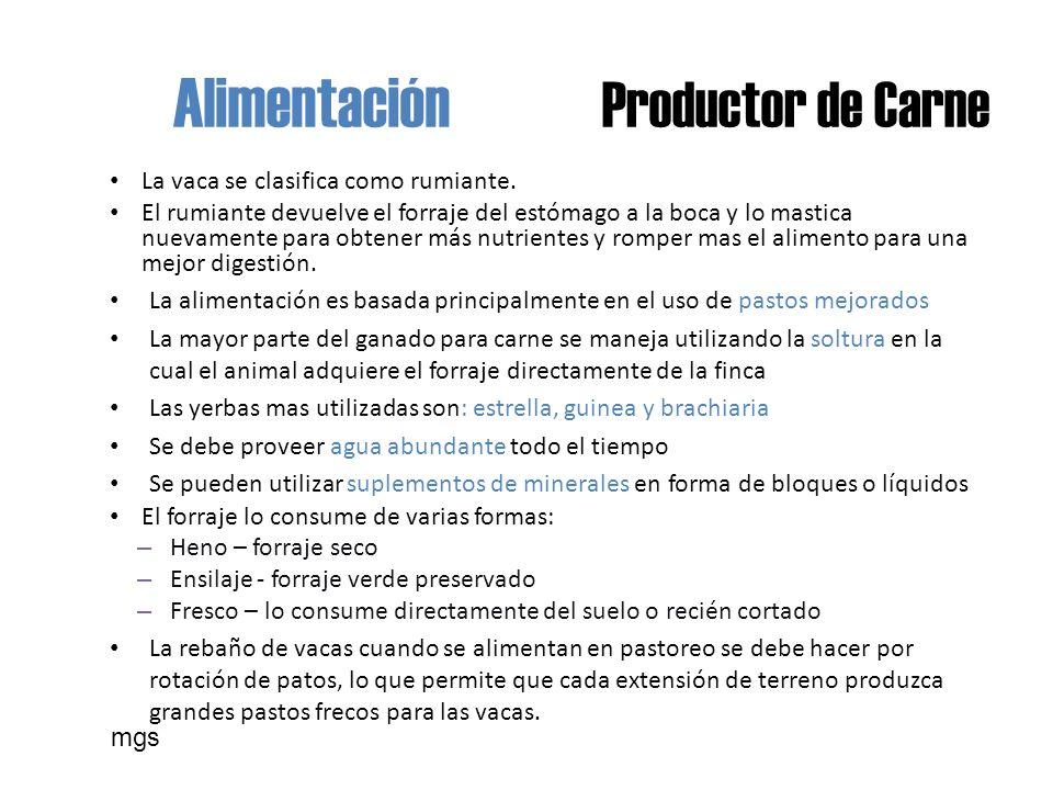 Productor de Carne Reproducción En P.R.