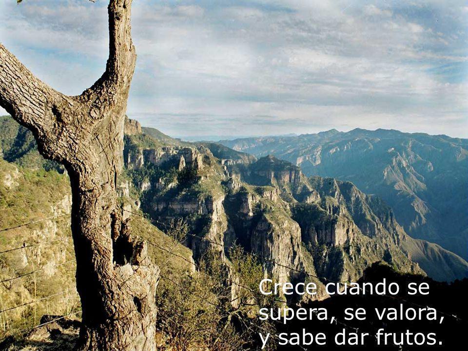 GRACIAS!!! Fotos Manuel De La Rocha N.