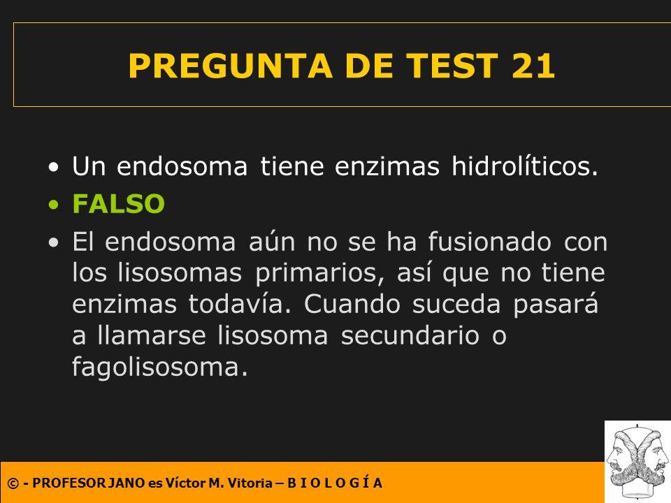© - PROFESOR JANO es Víctor M. Vitoria – B I O L O G Í A PREGUNTA DE TEST 21 Un endosoma tiene enzimas hidrolíticos. FALSO El endosoma aún no se ha fu