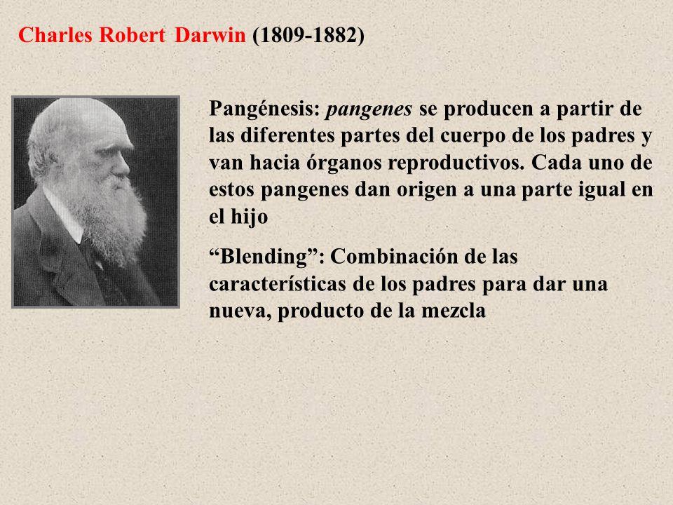 Charles Robert Darwin (1809-1882) Pangénesis: pangenes se producen a partir de las diferentes partes del cuerpo de los padres y van hacia órganos repr
