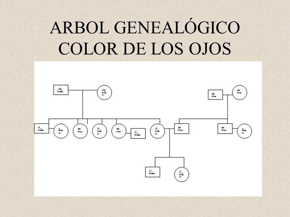 ARBOL GENEALÓGICO COLOR DE LOS OJOS