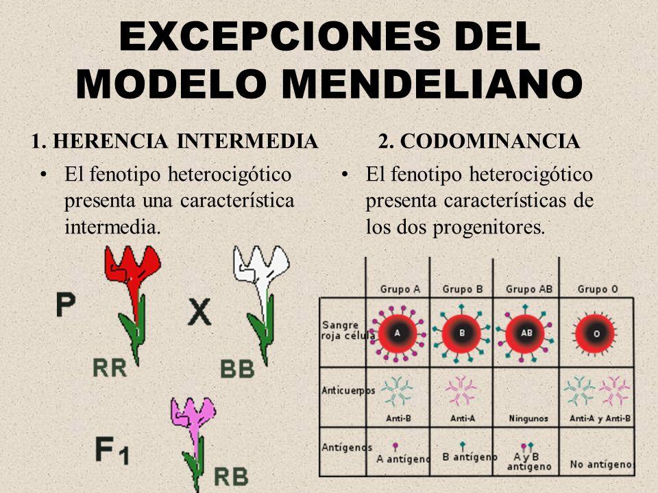 EXCEPCIONES DEL MODELO MENDELIANO 1. HERENCIA INTERMEDIA El fenotipo heterocigótico presenta una característica intermedia. 2. CODOMINANCIA El fenotip