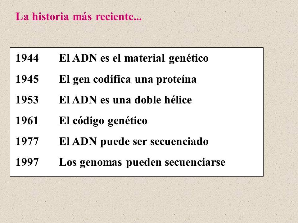 La historia más reciente... 1944 El ADN es el material genético 1945 El gen codifica una proteína 1953 El ADN es una doble hélice 1961 El código genét