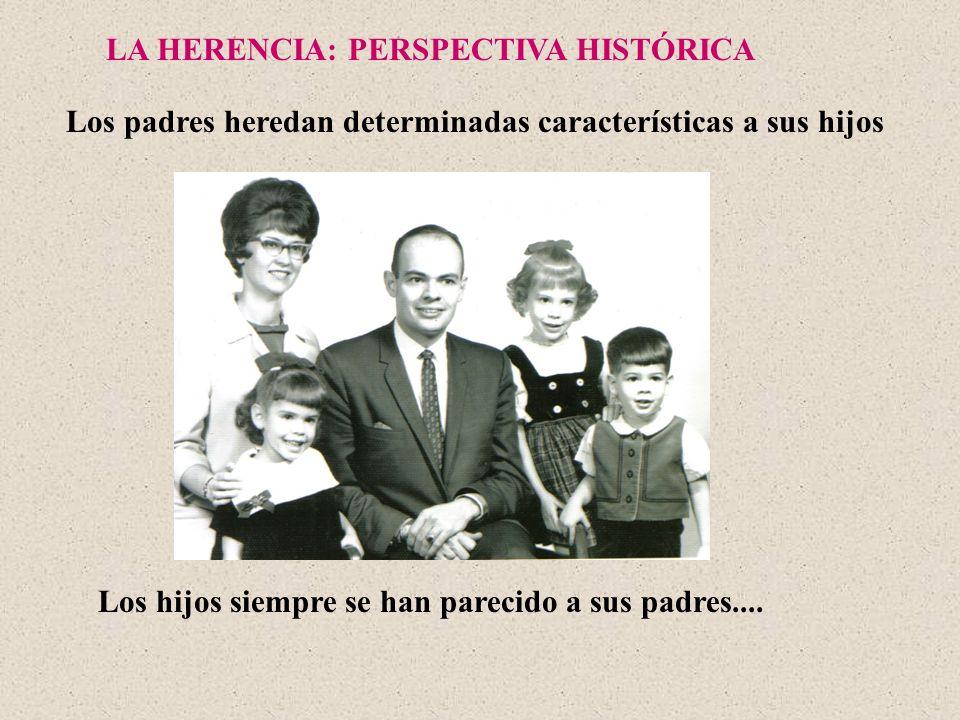 LA HERENCIA: PERSPECTIVA HISTÓRICA Los hijos siempre se han parecido a sus padres.... Los padres heredan determinadas características a sus hijos