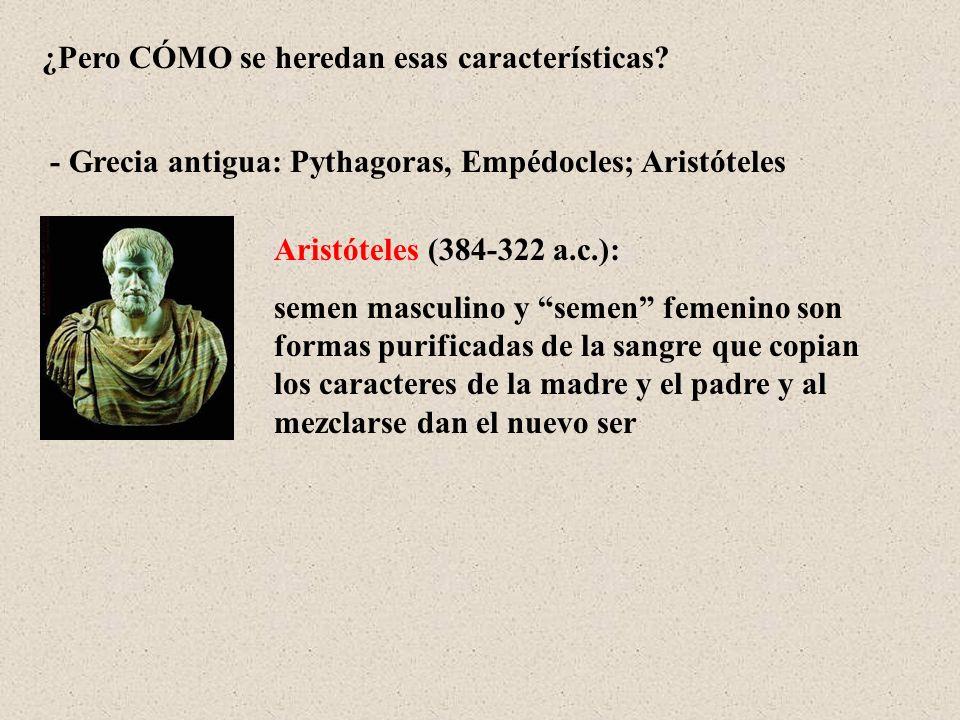 ¿Pero CÓMO se heredan esas características? Aristóteles (384-322 a.c.): semen masculino y semen femenino son formas purificadas de la sangre que copia