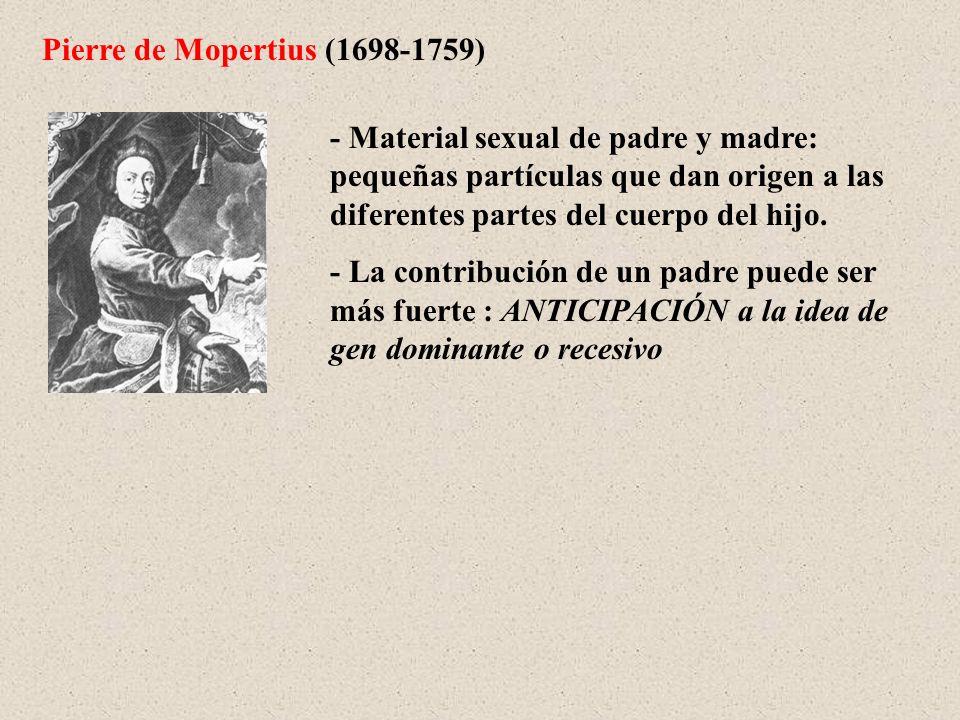 Pierre de Mopertius (1698-1759) - Material sexual de padre y madre: pequeñas partículas que dan origen a las diferentes partes del cuerpo del hijo. -