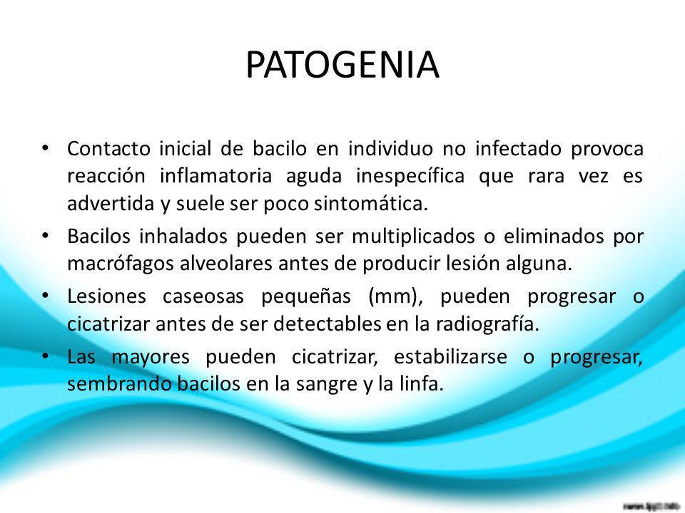 Contacto inicial de bacilo en individuo no infectado provoca reacción inflamatoria aguda inespecífica que rara vez es advertida y suele ser poco sinto