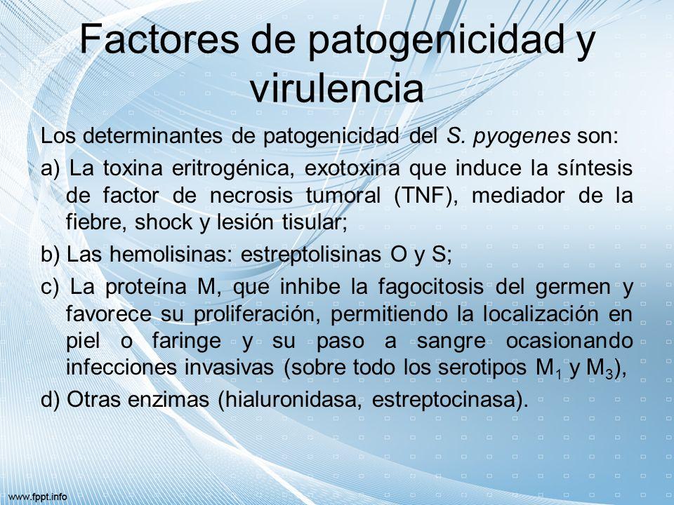 Factores de patogenicidad y virulencia Los determinantes de patogenicidad del S. pyogenes son: a) La toxina eritrogénica, exotoxina que induce la sínt