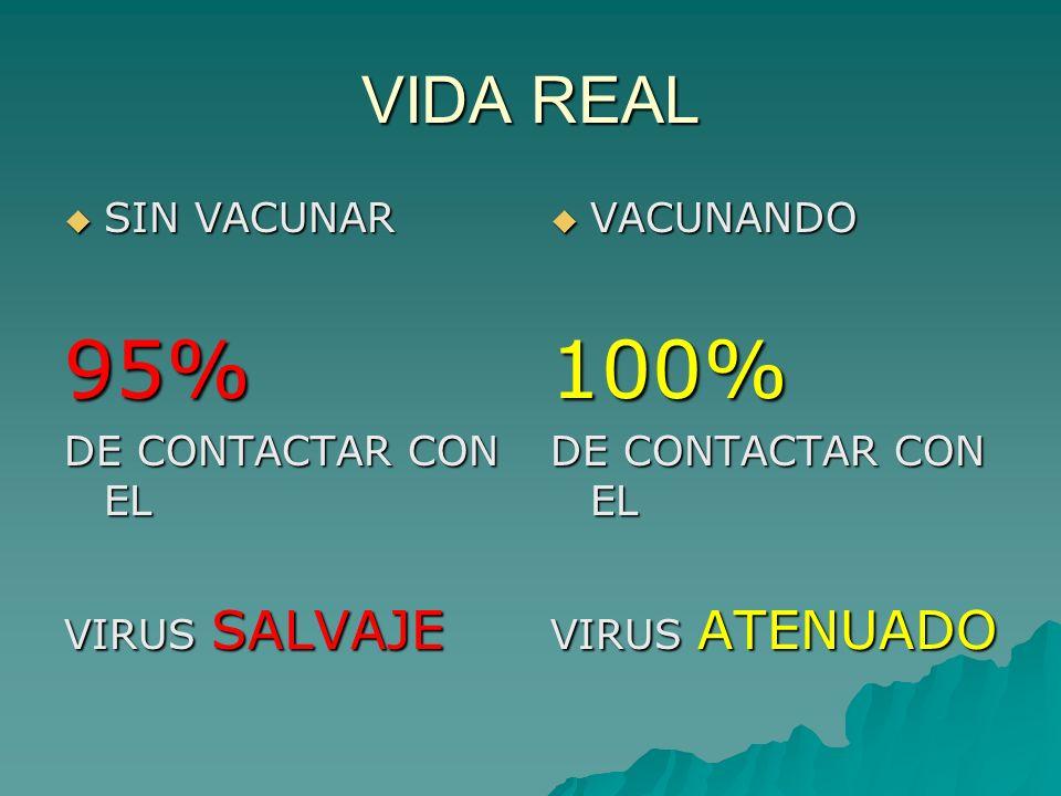 VIDA REAL SIN VACUNAR SIN VACUNAR95% DE CONTACTAR CON EL VIRUS SALVAJE VACUNANDO VACUNANDO100% DE CONTACTAR CON EL VIRUS ATENUADO