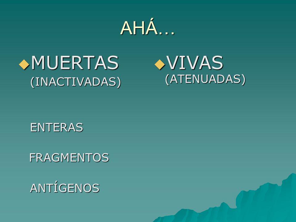 AHÁ… MUERTAS MUERTAS (INACTIVADAS) (INACTIVADAS) ENTERAS ENTERASFRAGMENTOS ANTÍGENOS ANTÍGENOS VIVAS (ATENUADAS) VIVAS (ATENUADAS)