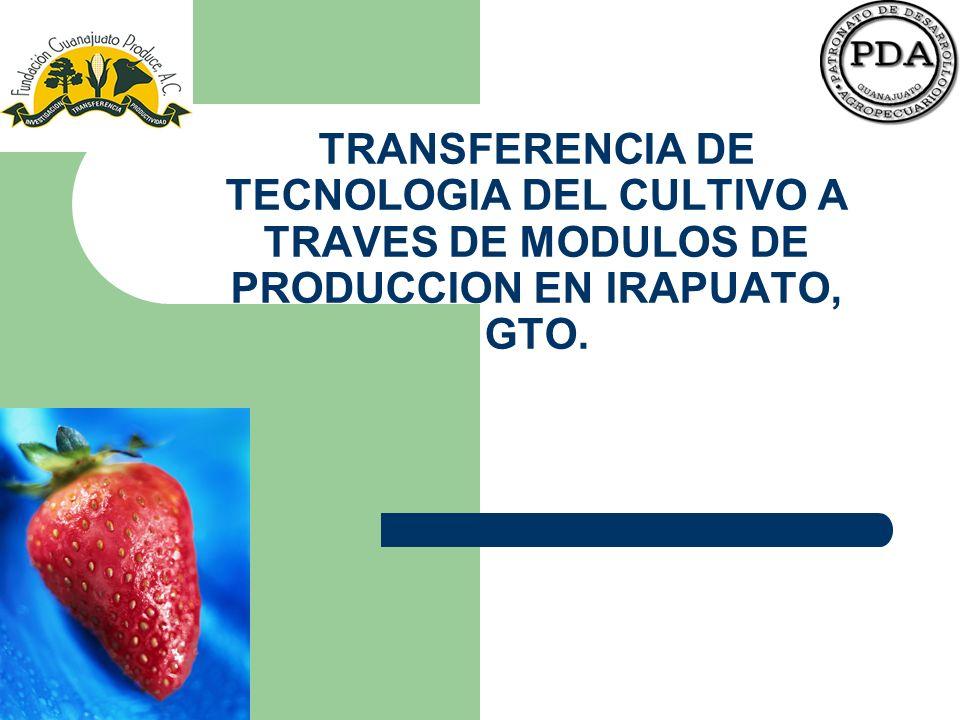 TRANSFERENCIA DE TECNOLOGIA DEL CULTIVO A TRAVES DE MODULOS DE PRODUCCION EN IRAPUATO, GTO.