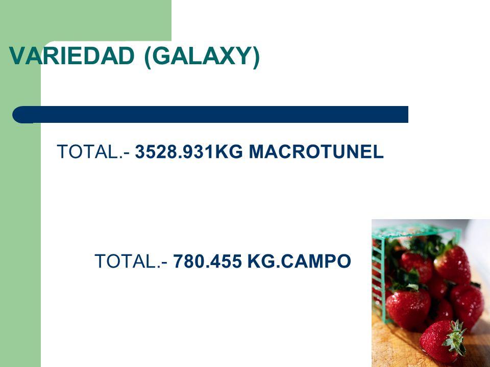 VARIEDAD (GALAXY) TOTAL.- 3528.931KG MACROTUNEL TOTAL.- 780.455 KG.CAMPO