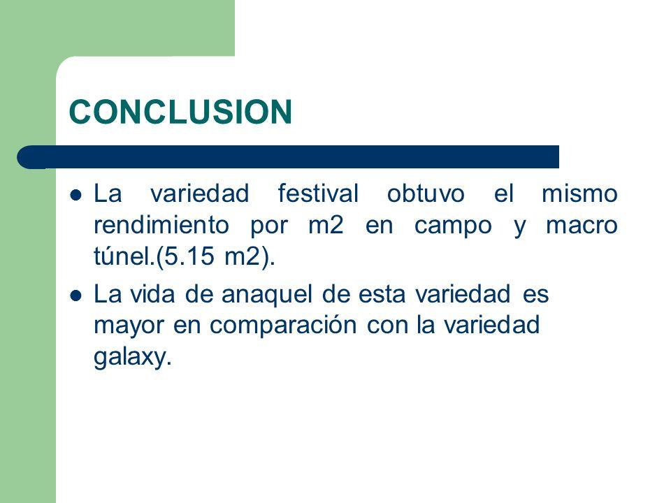 CONCLUSION La variedad festival obtuvo el mismo rendimiento por m2 en campo y macro túnel.(5.15 m2). La vida de anaquel de esta variedad es mayor en c